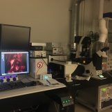 Been spending a lot of time on the confocal at August Krogh